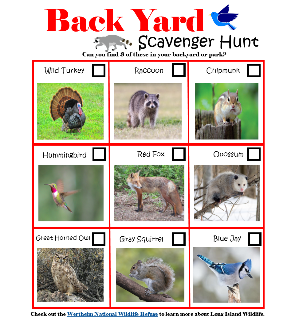 Backyard Wildlife Scavenger Hunt